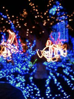 merryクリスマス(*^o^*)